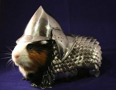 Oh come'on, every guinea pig needs chain mail!