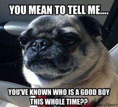 Pug acting like Marlon Brando in The God Father :)