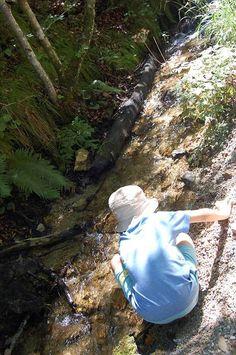 Wandern am und um den Hechtsee - ein Paradies für Groß und Klein mit viel Wasser und traumhaften Wäldern