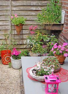 container garden - pink flowers