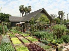 Une famille américaine produit 3 tonnes de nourriture dans son jardin | Conseils de jardinage pour jardiniers curieux