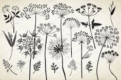 Botanical elements. More than 68! by GrafikBoutique on @creativemarket