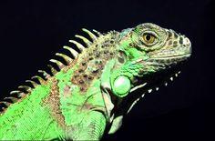 exotische reptielen - Google zoeken