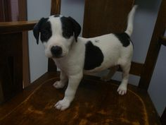 #Founddog #Broughton #OH Male Black & White Puppy Route 613 PAULDING COUNTY DOG KENNEL https://m.facebook.com/story.php?story_fbid=394887067316598&id=272091246262848