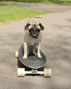They see me rollin', they hatin'.