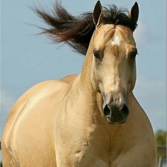 Horses Obsessed added a new photo. Some Beautiful Images, Beautiful Horses, Beautiful Gorgeous, Reining Horses, Dressage, American Quarter Horse, Quarter Horses, Grace Beauty, Horse Face