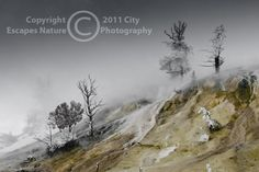 Limited Edition Nature Art Print. Alien Landscape -- Palette Springs in Winter. Landscape photograph:  Trees, Mammoth Hot Springs, Yellowstone National Park, Wyoming, Trees, Snow, Mist, Steam, Limestone, Winter