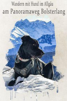 Winter, Movies, Movie Posters, Art, Tours, Alps, Vacation, Pet Dogs, Viajes