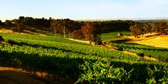 Eden Valley Wolf Blass Winery