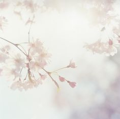 Santucci & Co. — Rinko Kawauchi — Approaching Whiteness  So beautiful!  #ss14 #shopbird15