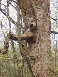 Tree monster by Shutterfool, via Flickr