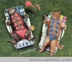 Gambar Lucu Kucing Berjemur