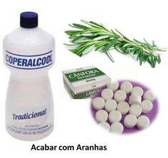 ACABAR_COM_ARANHA_ALECRIM http://solucoeslucymizael.com.br/afastar-aranhas-domesticas-e-caranguejeiratarantula_acabar_com_taruira_de_parede/