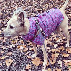 Nowy sweterek /  new sweater