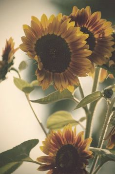 I want your life to be full of sunflowers <3
