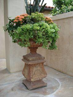 An abundance of succulents make a beautiful display