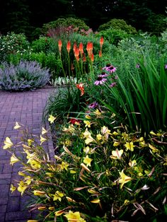 Daylilies, coneflowers, red hot poker, lavender