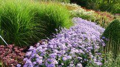 How To Grow A Mirco Prairie - Pflanzideen Prairie Garden, Garden Cottage, Flower Garden Design, Low Maintenance Landscaping, Beautiful Flowers Garden, Front Yard Landscaping, Wisconsin Landscaping Ideas, Azaleas Landscaping, Drought Resistant Landscaping
