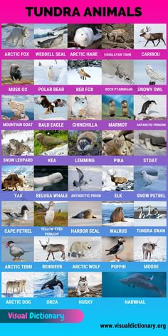 English Teaching Materials, Learning English For Kids, English Language Learning, List Of All Animals, Animals Of The World, Animals And Pets, Arctic Hare, Arctic Wolf, Grammar And Vocabulary