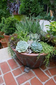 Potted succulent garden DIY Garden Yard Art When growing your own lawn yard art, recycled and up cyc Succulent Gardening, Succulent Pots, Cacti And Succulents, Planting Succulents, Planting Flowers, Cactus Plants, Tiny Cactus, Succulent Display, Cactus Flower