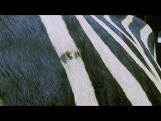 Racing Stripes Trailer (2005) HD 720p
