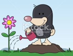 Mole pours flower in the garden Royalty Free Stock Vector Art Illustration