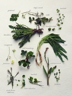 simply-divine-creation:  Wild herb gathering » Fork and Flower