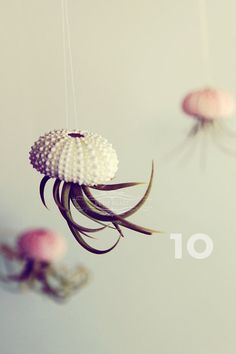 "The ""jellyfish"" terrarium: Tillandsia air plants growing from a sea urchin test."