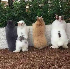 Cute Baby Bunnies, Funny Bunnies, Lop Bunnies, Dwarf Bunnies, Cute Little Animals, Cute Funny Animals, Cute Animal Photos, Animal Pictures, Dog Pictures