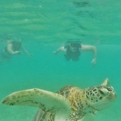 Snorkeling With Turtles - Akumal, Mexico