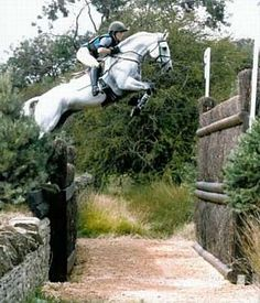 Irish draught horse - wonderful events and show jumping horse. www.idhsgb.com