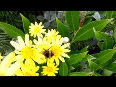 Nokia Lumia 925 macro flowers and bee