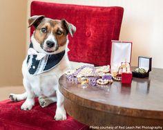 Raise Your Paws & Paddles in ALDF Fundraiser! | Animal Legal Defense Fund aldf.org
