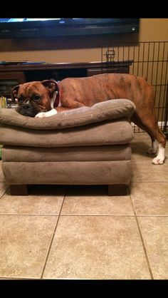 Rocco... #boxer #dog My big baby!!!!