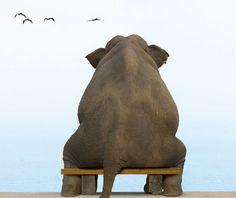 ☮ American Hippie Art Extreme ~ Elephant .. Everybody needs their quiet spot ;)