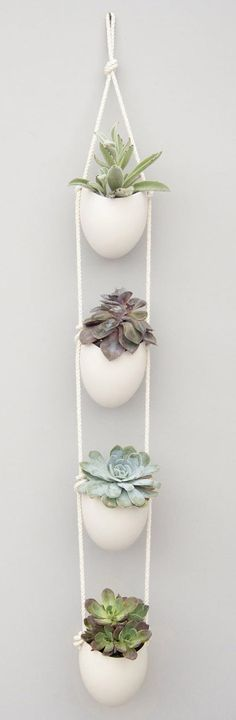 succulente deco minimaliste Hanging Succulents, Hanging Planters, Cacti And Succulents, Potted Plants, Indoor Plants, Indoor Garden, Garden Plants, Ikea Planters, Hanging Plants Outdoor