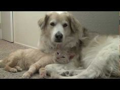 Rescue Cat Loves Dog. This is why I love rescue animals...because they love the family who gave them a home, even the doggy :)