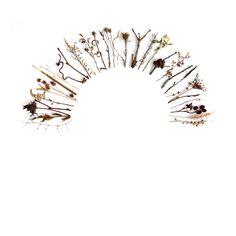 winter stems (mary jo hoffman)