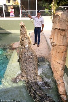 Daredevils spend 20 minutes under the water at the attraction - and get to see the crocs m...