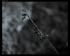 Indra Cor | Photo