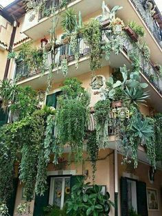 Unbelievable balconies overflowing with plants bI giardini pensili di Babilonia… Cacti And Succulents, Planting Succulents, Planting Flowers, Cacti Garden, Hanging Plants, Indoor Plants, Hanging Gardens, Pot Jardin, Dream Garden