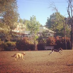 Dog Parks Alexandria Va Off Leash