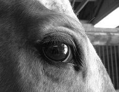 Appaloosa eye in b