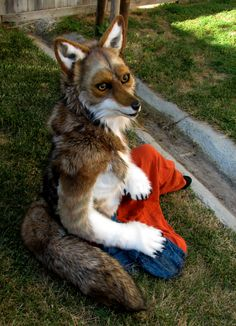 *Actual coyote costume* Coyote resting by Eddie-Ka.deviantart.com on @deviantART