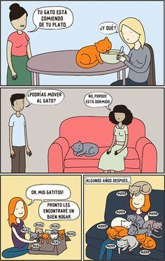 Los gatos son criaturas extremadamente extrañas. Esinútil tratar deentenderlos, por loque solo queda aceptarlos yamar con todas sus rarezas.