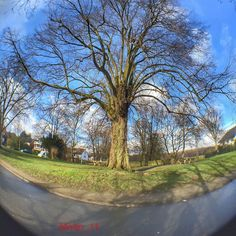 "Einer der schönsten Bäume in Sprockhövel #sprockhövel #baum #tree #nature #naturelovers #iphone6sphotography #fisheye #olloclip #ig_nrw #loves_united_trees #loves_united_nature #ichliebewetter #beautiful #like4like #cool #follow #skyporn #skylovers #Ruhrgebiet #love_ruhrgebiet #Februar 2016 am 3.2.2016 #unterwegs by molto_11 Follow ""DIY iPhone 6/ 6S Cases/ Covers/ Sleeves"" board on @cutephonecases http://ift.tt/1OCqEuZ to see more ways to add text add #Photography #Photographer #Photo…"