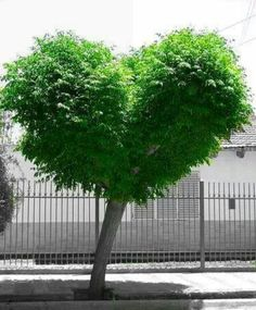 <3.the love tree.<3            t