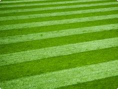 lawn stripes is something I would love to be able to do.
