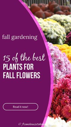 Ideas for perennials and shrubs to grow in autumn that will give your yard or garden landscape beautiful fall flowers. #fromhousetohome #fall #gardening #gardenideas #garde #fallflowers