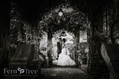 Fern Tree wedding photography are south african wedding photographers working out of JHB. Tree Wedding, Garden Wedding, South African Weddings, Ferns, Gardens, Wedding Photography, Wedding Dresses, Bride Dresses, Bridal Gowns